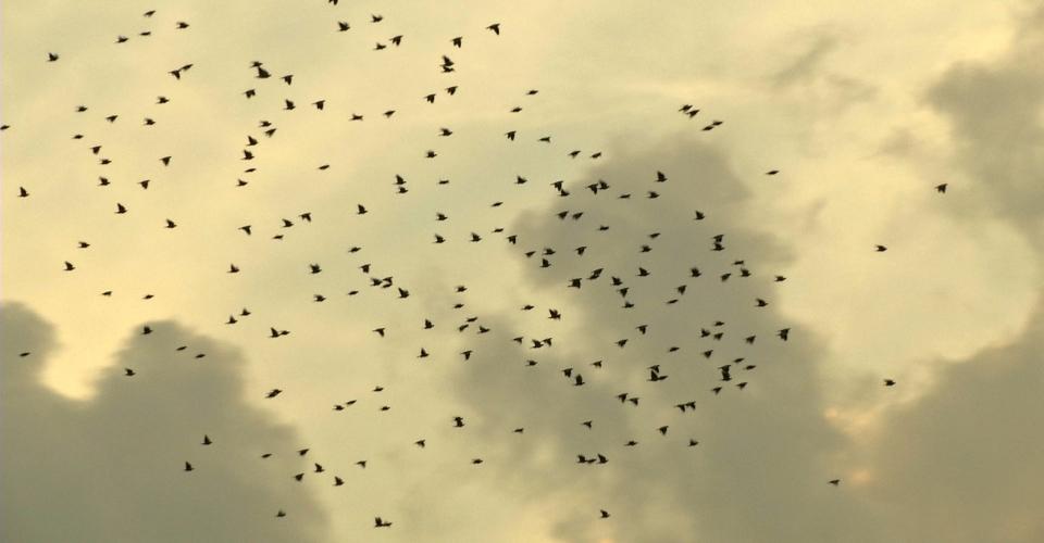 Baratti – caccia al colombaccio 4