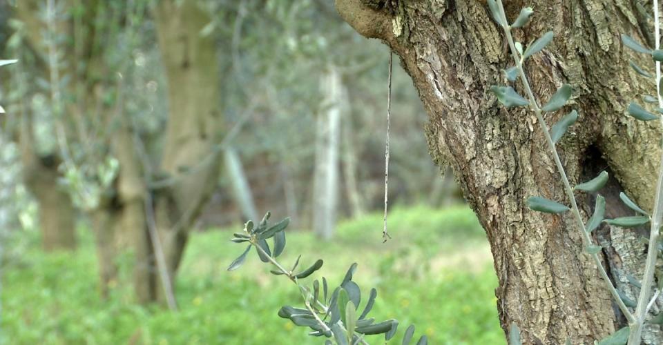 Caldarola – Ambiente e Territorio2