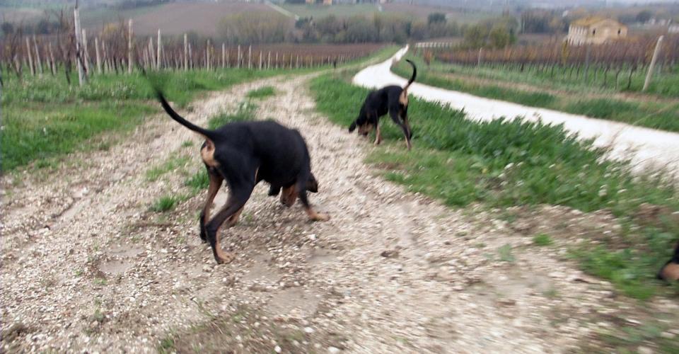 Staffolo – Attivit Venatoria00000002