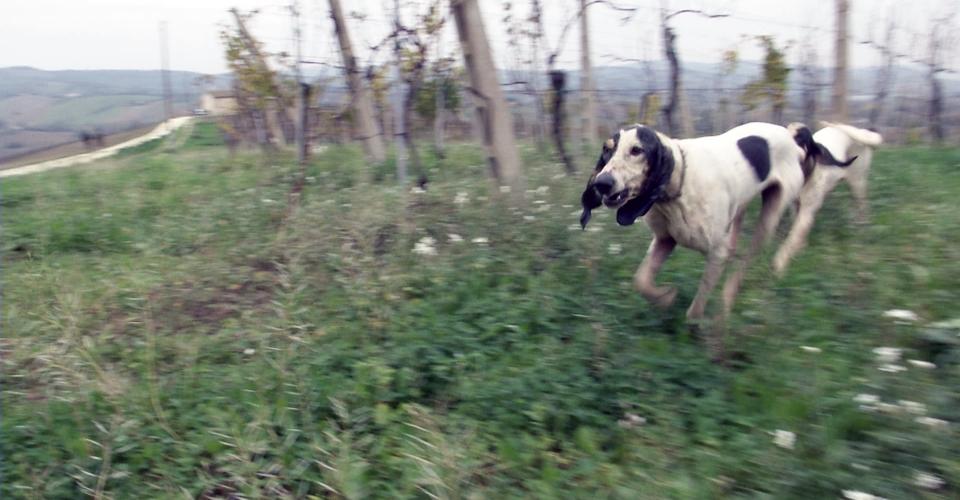 Staffolo – Attivit Venatoria00000005